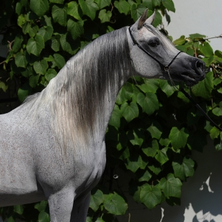 https://www.halsdonarabians.com/core/image.php?src=app/media/uploads/website/10/photos/website_horses/594/AB6I3721.jpg&width=320&height=320